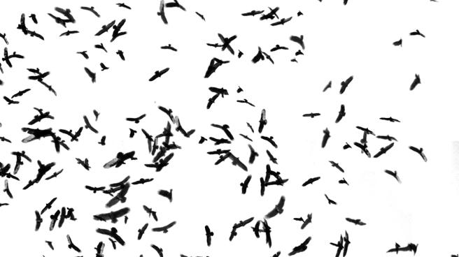 be you. photography - bird swarm - 10