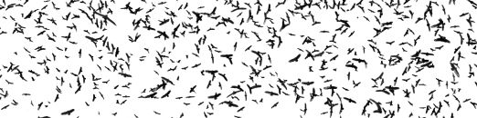be you. photography - bird swarm - 09