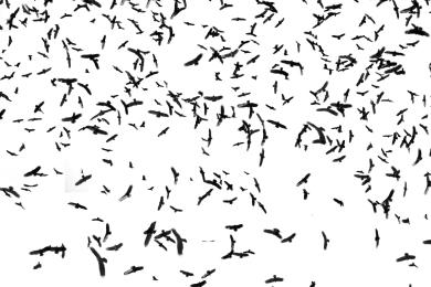 be you. photography - bird swarm - 06