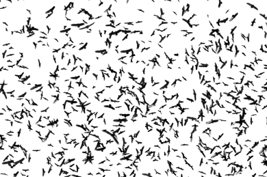 be you. photography - bird swarm - 05