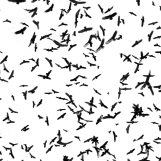 be you. photography - bird swarm - 03